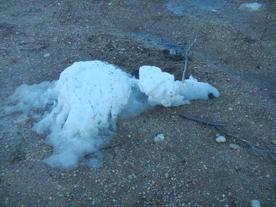 Frosty Died