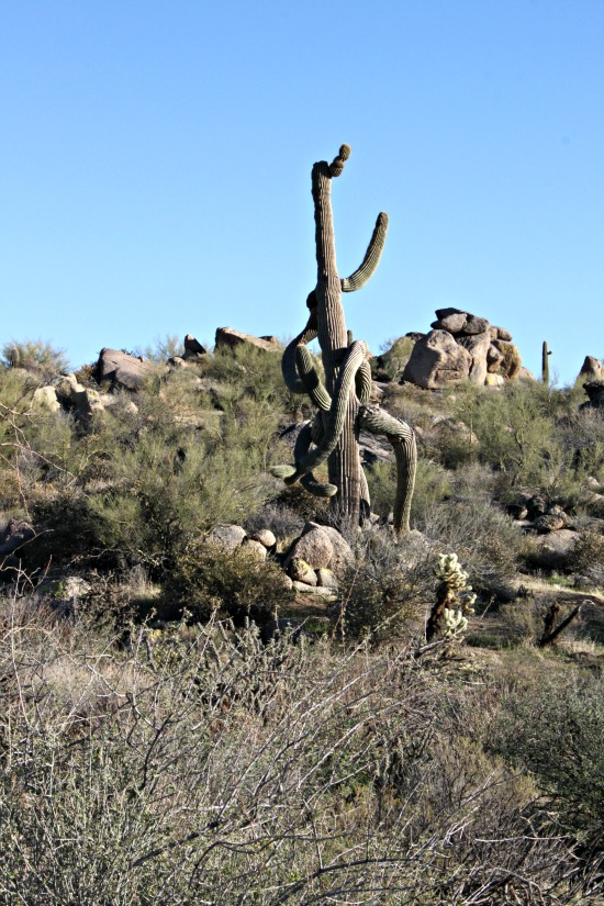 Awesome Saguaro