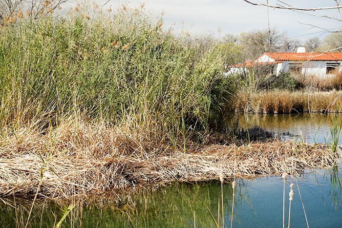 desert wetland