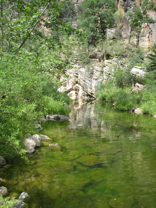 West Clear Creek Vegetation