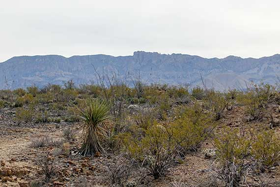 Chisos from Croton Spring