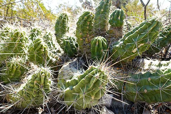 Cactus on Chihuahuan Desert Nature Trail