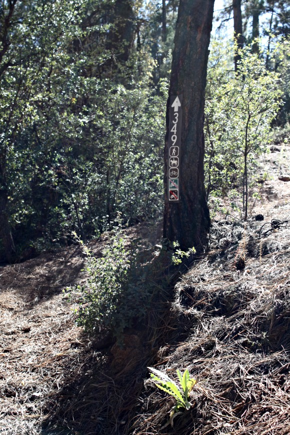 Granite Basin Recreation Area - Trail 349