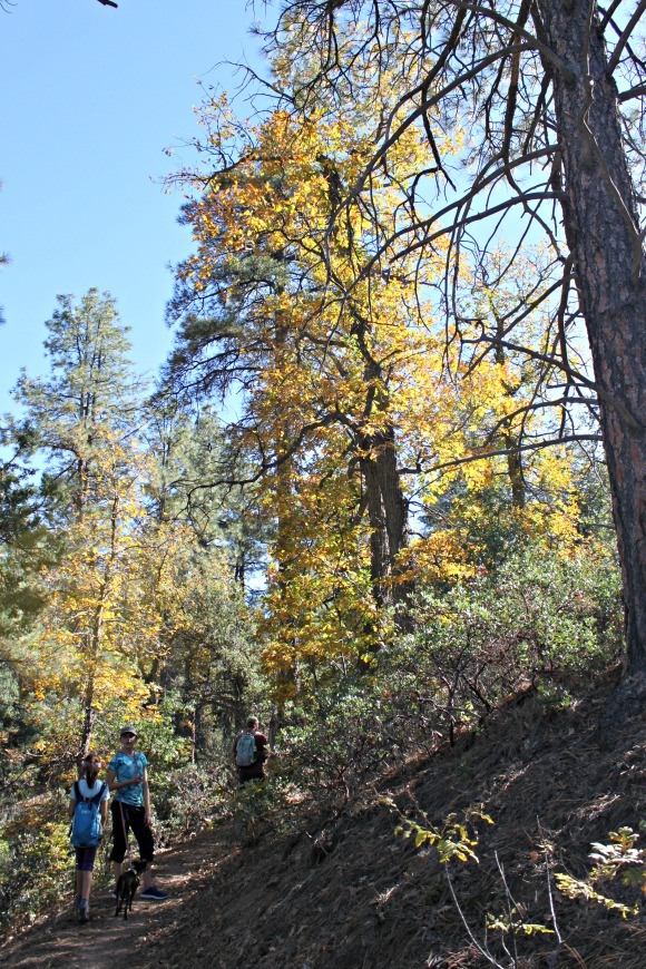 Granite Basin Recreation Area - Autumn Leaves