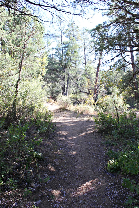 Granite Basin Recreation Area - Trail Shot