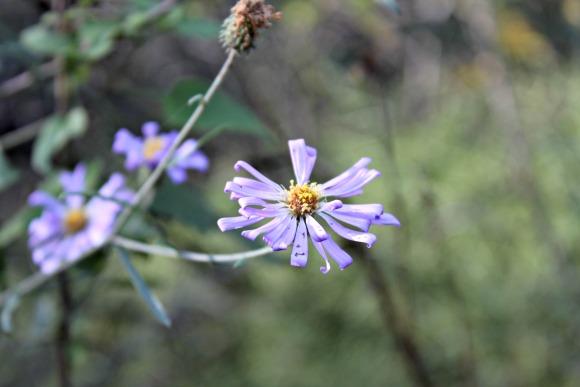 Granite Basin Recreation Area - Purple Wildflower