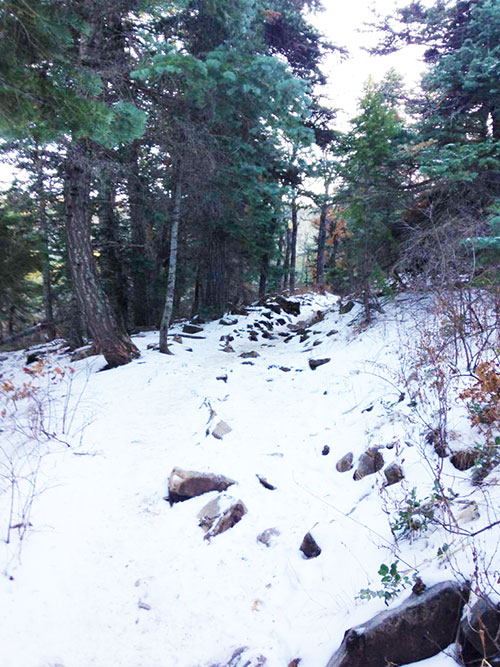 Tree Springs Trail in winter