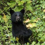How to Camp Safely in Bear Country