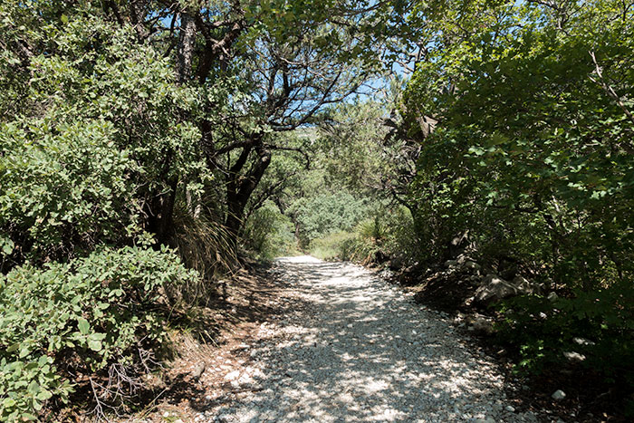 McKittrick Canyon Forest