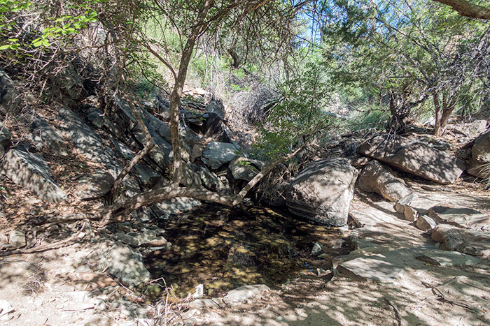 Natural Spring in Modesta Canyon